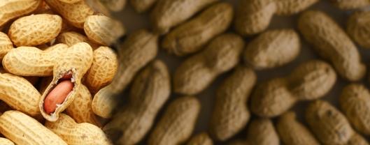 peanut-allergy